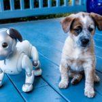 Robotok kutyákról mintázva?
