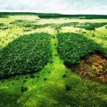 Miért kell kivágni egy 180 éves erdőt?