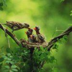 Mit tehetünk a madarakért és a fákért?