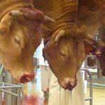 Túl a húson – a Beyond Meat tőzsdei robbanása