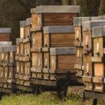 Idén minden a hazai méhészek ellen dolgozik