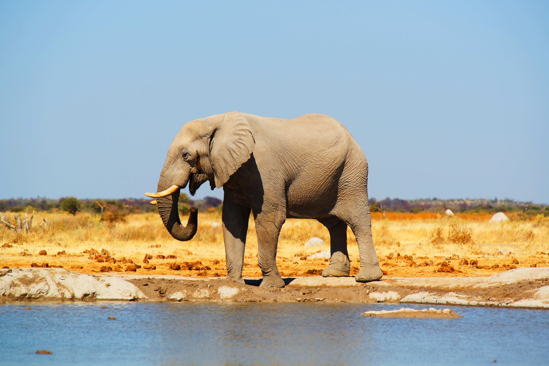 Adóvilág: Botswana