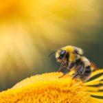 Mekkora bajban vannak a méhek?