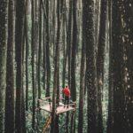 Járványbüdzsé: nem látjuk a fától az erdőt