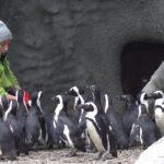 Népszámlálás az állatkertben