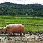 ADÓVILÁG: Laosz